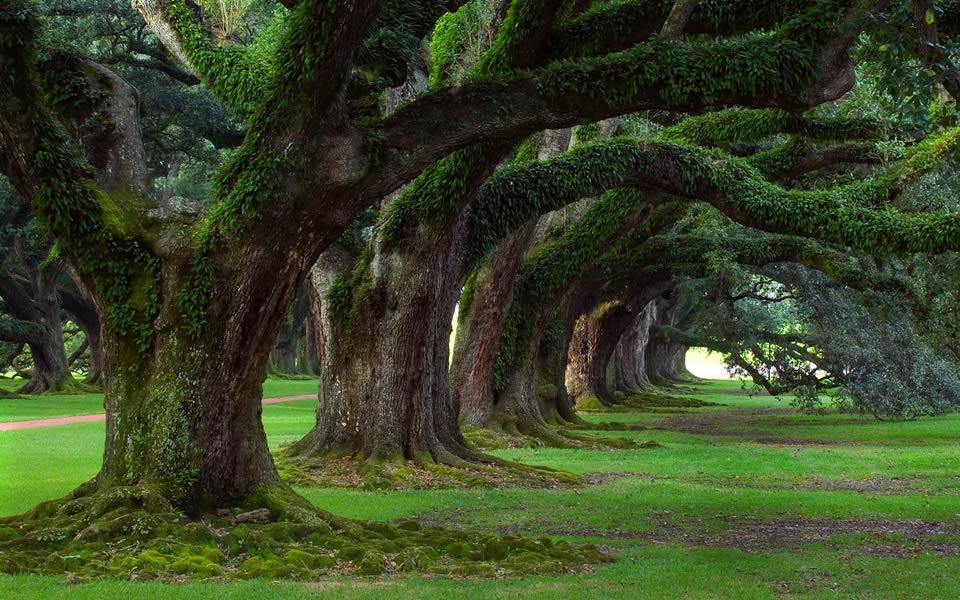 trees960